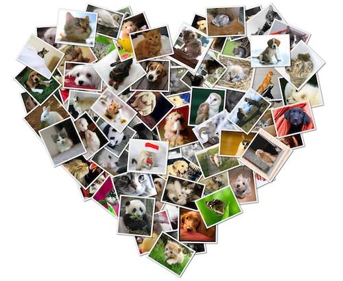 Collage cuore