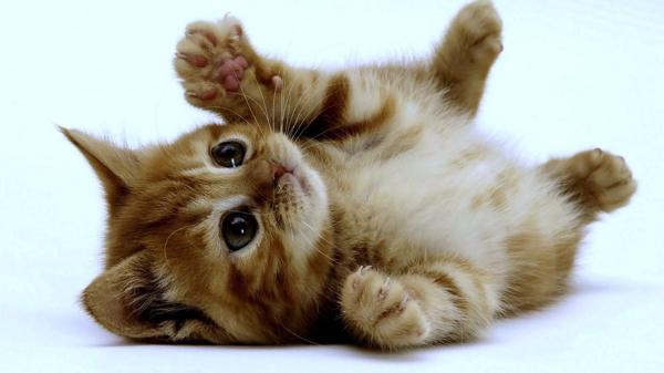 10 e oltre siti web dedicati al mondo dei gatti