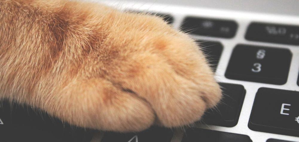Social networks per i nostri amici animali. Per conoscerli meglio e condividere