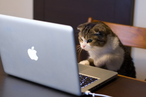 Macbook cat