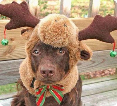 moose_christmas_dog