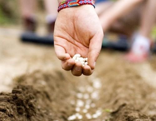 5 e oltre siti per creare e coltivare il proprio orto