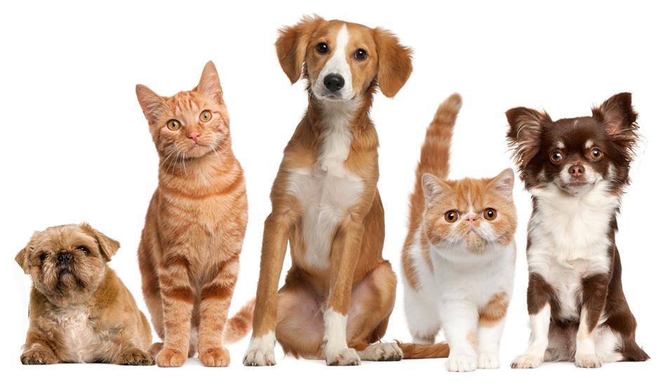 8 e oltre Blogs dedicati agli amici Animali