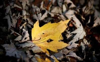 100 bellissimi sfondi di autunno