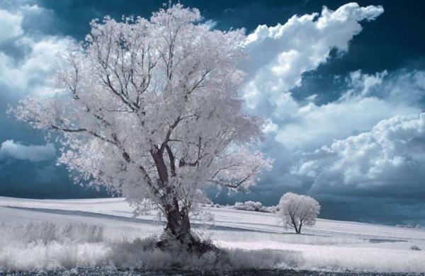 11 immagini spettacolari riprese con effetto infrarosso