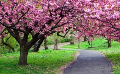 20 bellissimi alberi da fiori nel mondo