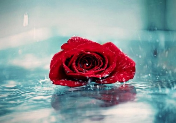 20 e oltre fotografie dedicate alle Rose rosse