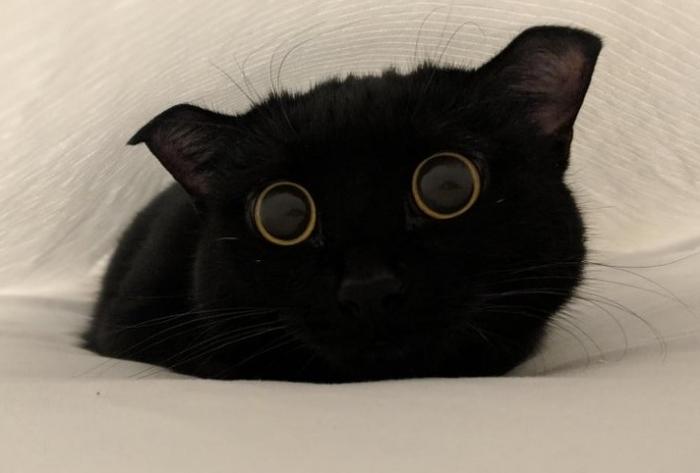 20 foto di gattini per farvi ritrovare il sorriso