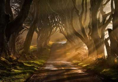 20 fotografie di piante e alberi