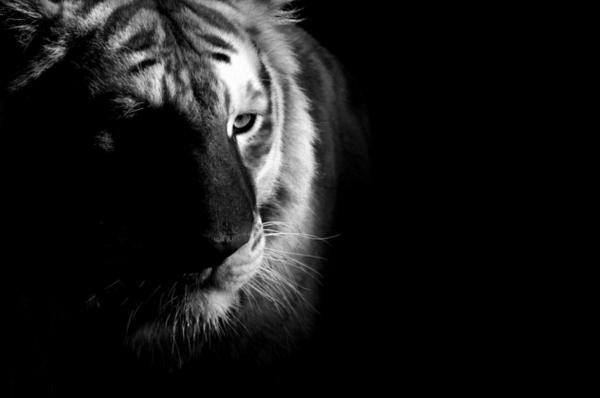 20 fotografie in bianco e nero di animali nello zoo