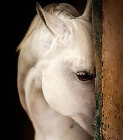 20 magnifiche fotografie di cavalli