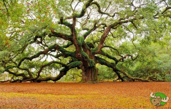 20 tra i piu belli alberi in giro per il mondo
