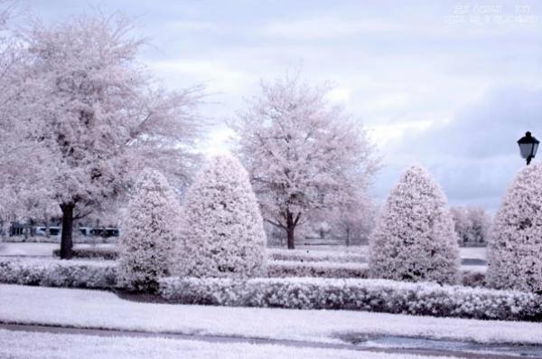 25 bellissime fotografie invernali da ispirazione