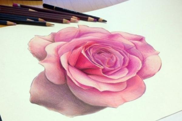25 bellissime rose disegnate e colorate