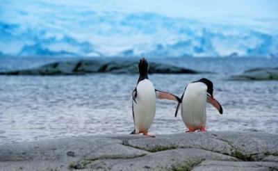 25 e oltre sfondi dedicati al mondo dei Pinguini