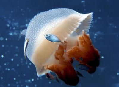 25 incredibili fotografie dal mondo sottomarino