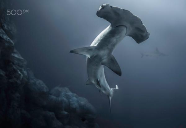30 bellissime immagini sott'acqua