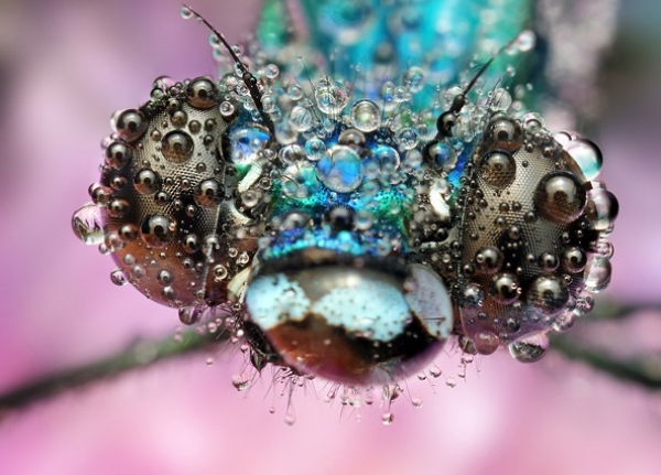 30 bellissimi esempi di fotografie macro
