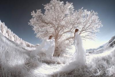 30 esempi belli di fotografie con effetto infrarossi