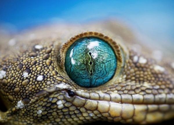 30 esempi di fotografia nella natura selvaggia