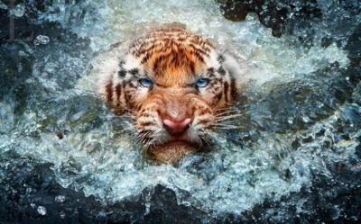 30 fotografie di vita selvaggia da ispirazione