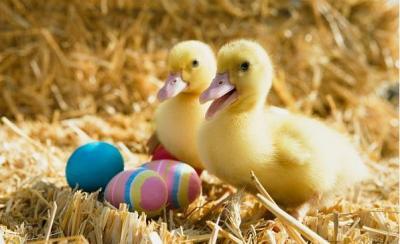 30 sfondi carini e divertenti di Pasqua