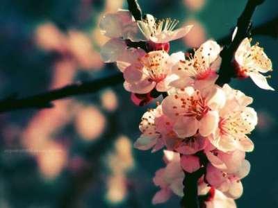 30 sfondi di ispirazione per la primavera