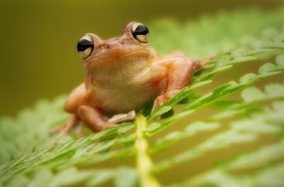 35 bellissime ed emozionanti fotografie di animali nella natura