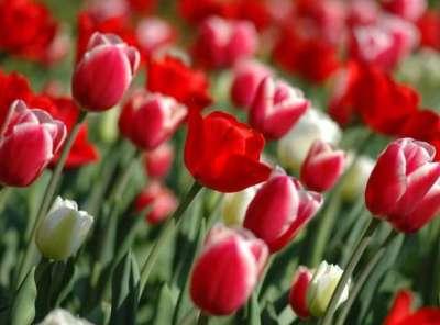 35 Sfondi dedicati alla Primavera
