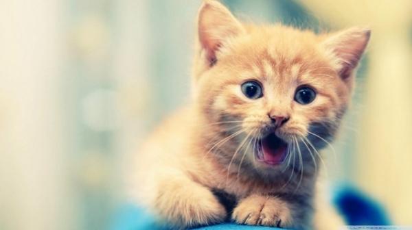40 adorabili fotografie di gattini