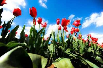 40 deliziose fotografie di fiori