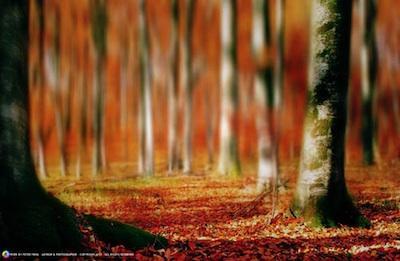 40 fotografie di foreste con la magia della luce naturale