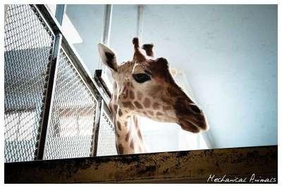 40 fotografie incredibili di animali