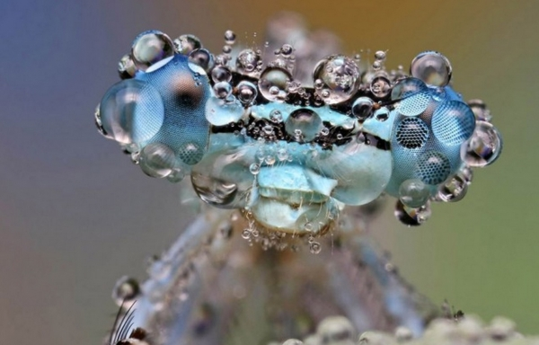 40 fotografie macro d insetti da ispirazione