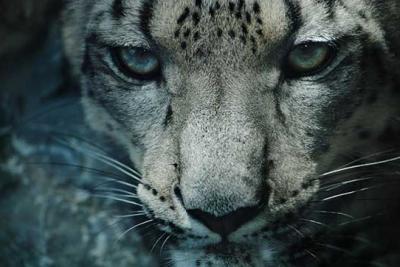 40 piacevoli sfondi retina e mac leopard