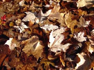40 sfondi di textures di foglie