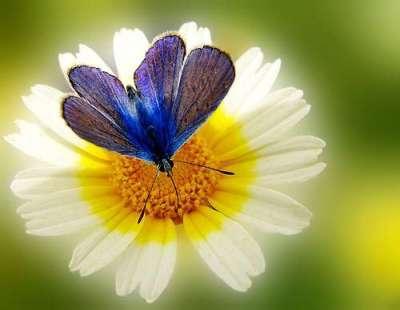 41 deliziose fotografie di fiori