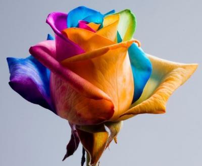 45 bellissime immagini di rose