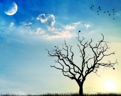 45 incantevoli sfondi di alberi