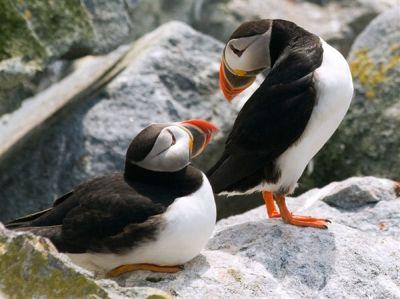 50 e oltre fotografie di animali da National Geographic