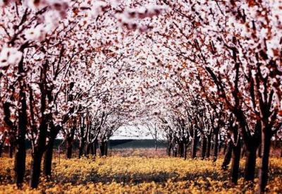 50 e oltre fotografie di primavera mozzafiato