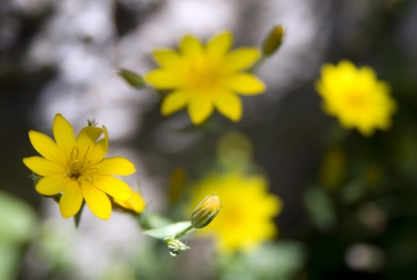 50 e oltre immagini di fiori da ispirazione