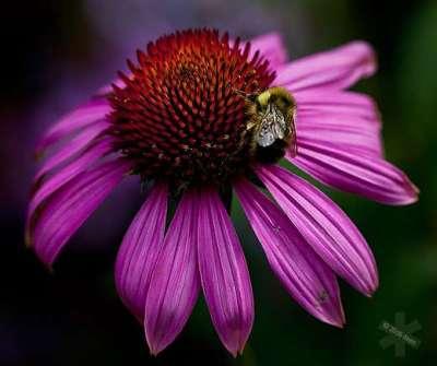 50 esempi di fotografie di fiori