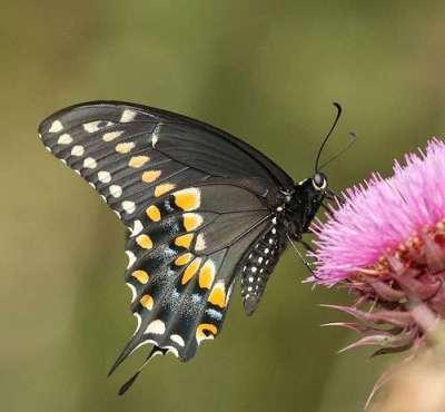 50 immagini e fotografie di insetti colorati
