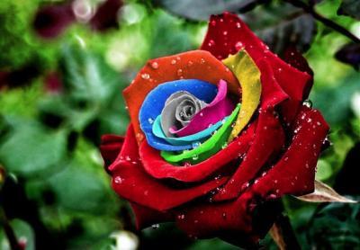 50 stupende fotografie di fiori