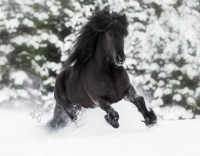 59 bellissime fotografie di cavalli immersi nella natura islandese