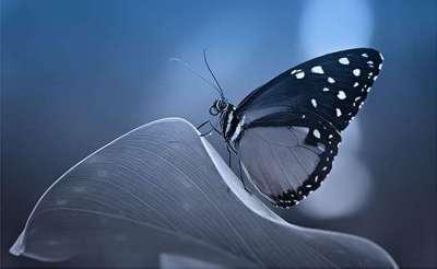 60 bellissime fotografie di farfalle