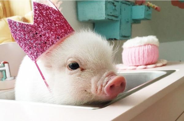 9 bellissimi animali con cappellini adorabili
