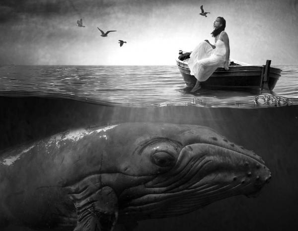 9 immagini elaborate in bianco e nero di animali