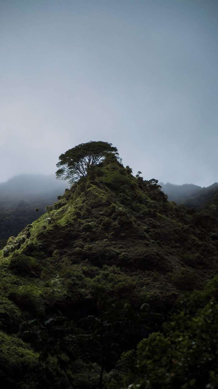 A forestal Peak